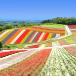北海道からニュージーランドへの行き方を徹底紹介!最も安く行く方法とは?