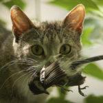 猫ブームの日本とは裏腹にニュージーランドでは飼い猫禁止令が!?